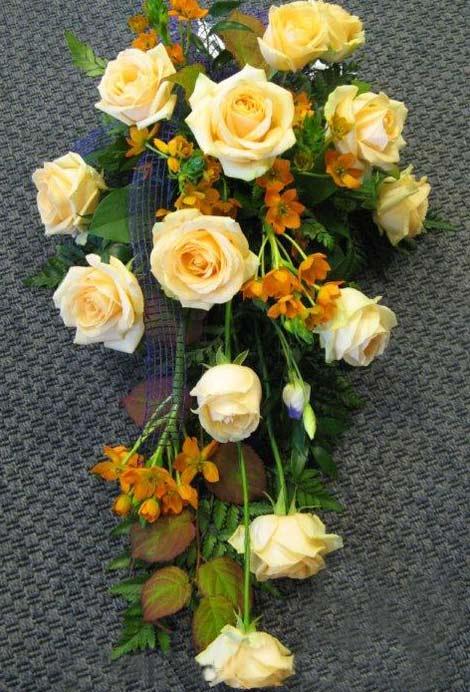 180 ruusu, afrikantähdikki